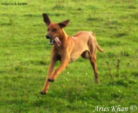 Aries Khan